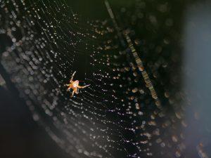 web crawler on large web